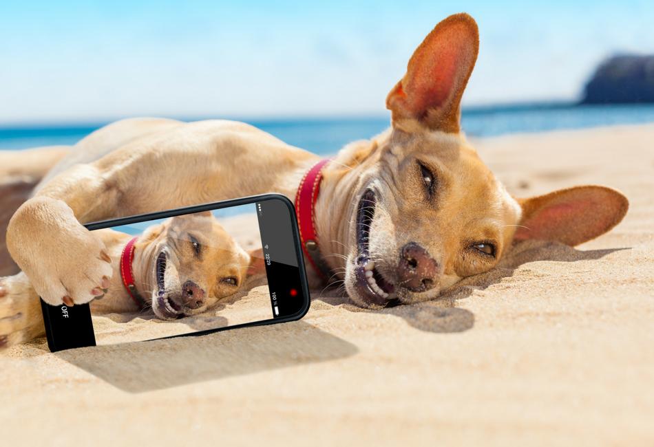 A Selfie fala mais de você do que você possa imaginar
