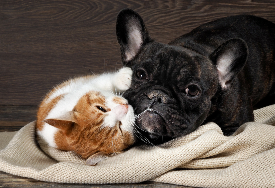 Você gosta de animais e os trata como seus próprios filhos?