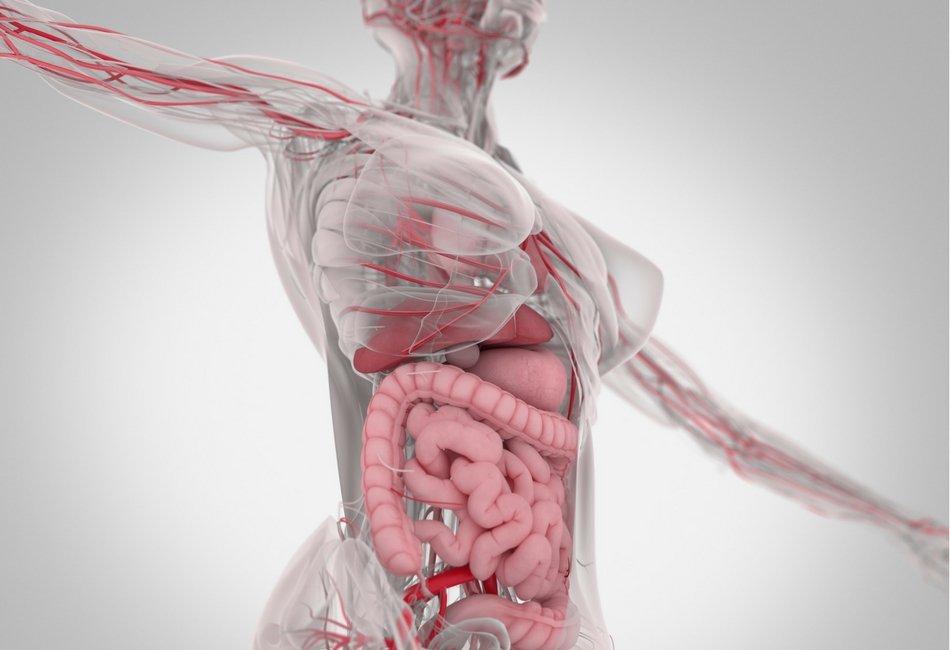 O impacto das substâncias adicionadas aos alimentos processados nos nossos intestinos