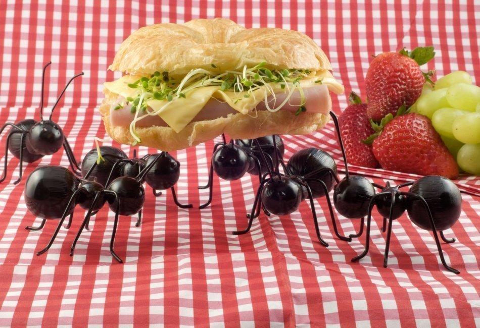 De quem você tem mais nojo?  Baratas ou Formigas?